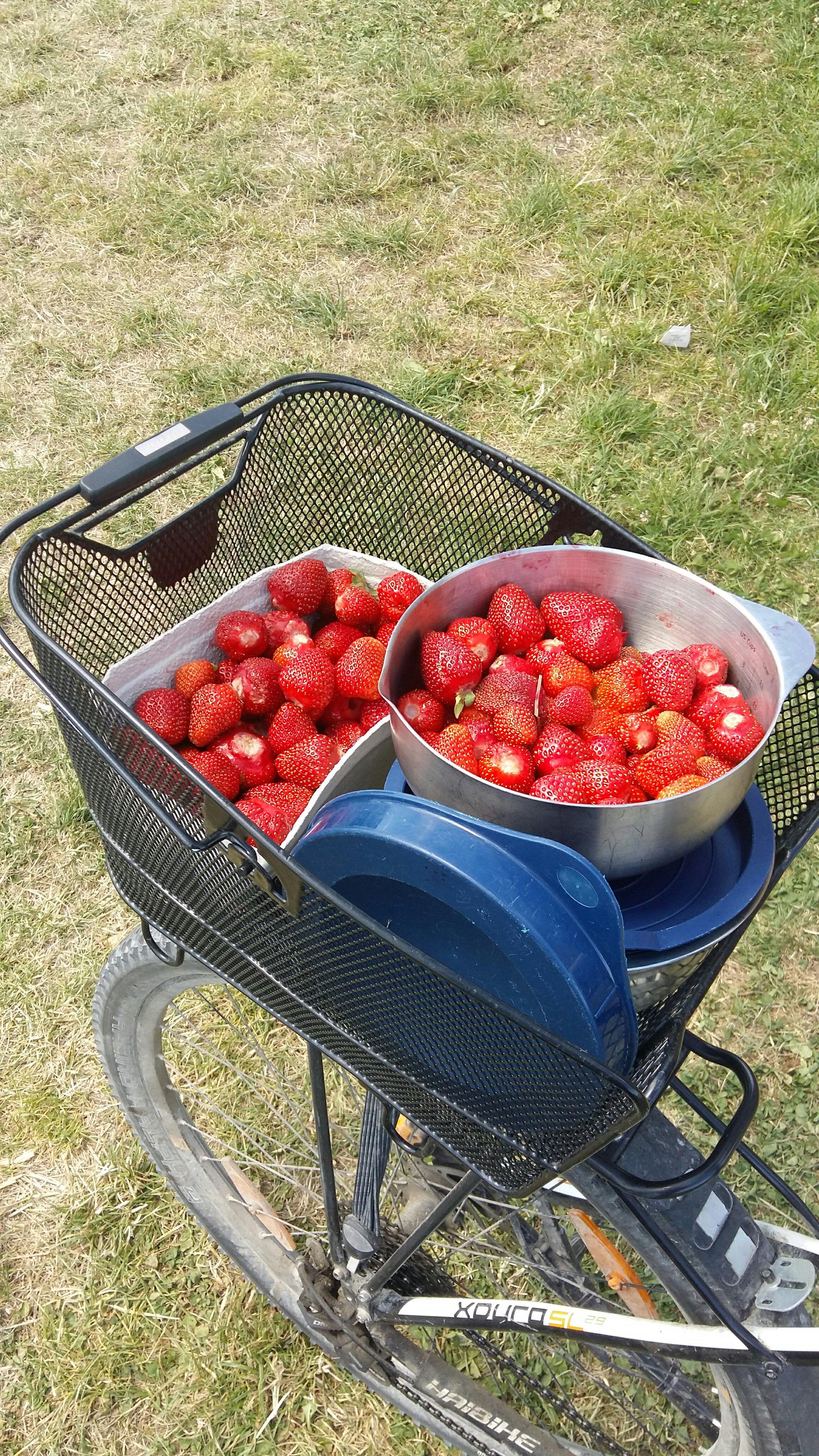 Leckere Erdbeeren in Gelting